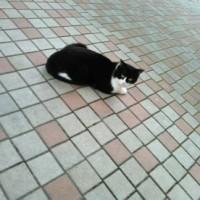 御免で済むなら猫要らず
