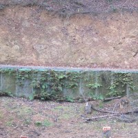 森の京都未来へつなぐ森林整備始まる