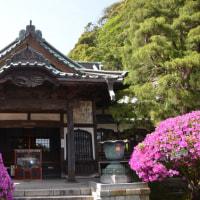 ツツジ咲く鎌倉へー高徳院と安養院