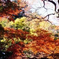 紅葉 (花 4117)