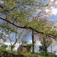 鴨川堤、納涼床が…… 京都