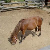 木曽馬変化