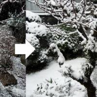 雪庭の変化