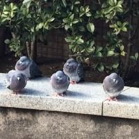 今週土・日は腸デトックス体験会!!