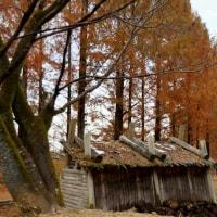 ムーミン谷の紅葉