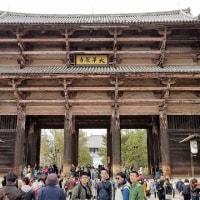 氷室神社の枝垂れ桜は?・・(^_^;)
