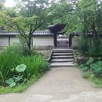 ブログ160530 唐招提寺~戒壇と蓮池・菖蒲