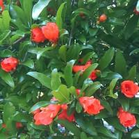今年も綺麗な花が・・・・!!
