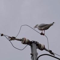 寒の内に集う水鳥たちの楽園