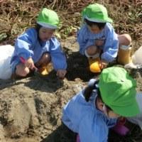 年少組さんのサツマイモ掘り!