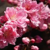 春がきました!