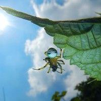 黄金色の輝き☆アオオニグモの糸