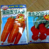 秋をむかえ再び野菜を育ててみよう