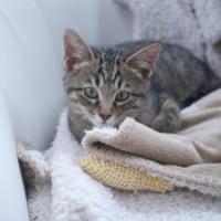 家猫、保護猫の体調管理、多頭飼育の大変さ、、、