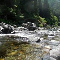 6月24日 天川鮎釣り 今季初