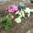 花壇の植え替えをしました!