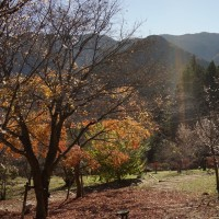 埼玉 城峯公園の紅葉と冬桜2016