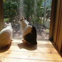 鳥レストランプレオープン日のねこ