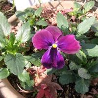 8月の種蒔き