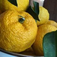今年も柚子ジャム♪フルーティ〜☆そして柚の枝伐採!!