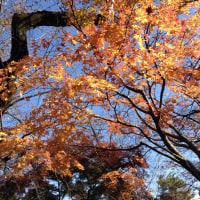 見事な紅葉、世田谷豪徳寺