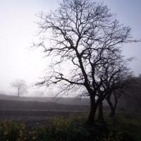 由布院温泉 由布の里 柿の木のある風景