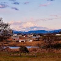 23/Jan 名残の月と朝焼けの富士山とトサミズキとカワセミの飛翔姿
