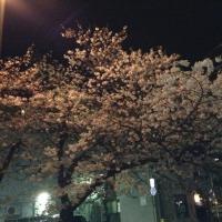 もうすぐ?春です(福岡市社交ダンス教室・ダンススクールライジングスタースタッフより)
