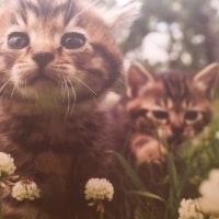 拗ねた ネコ!? (=^・^=)