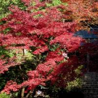 散るのが早い紅葉の名所、南禅寺と日向大神宮