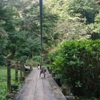 小山田緑地に行ってみました