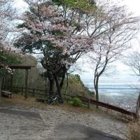 桜を見にポタっ