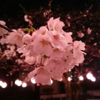 やっとこさ…春🌸