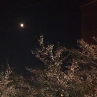 名残の夜桜