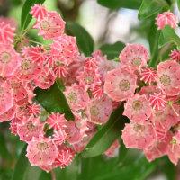第27回 蓼科 バラクラ フラワーショー 梅雨の晴れ間に・・・(6月26日)