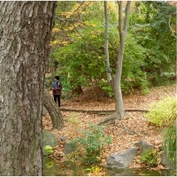 落葉樹木の向こうに。     16・12月4日