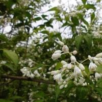 藤が咲く、ご近所早朝釣行の巻!
