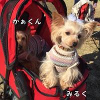 初めての昭和記念公園 しっぽフェスタ