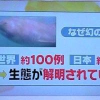 topics~「キッズウィーク」@ZIP! ほか