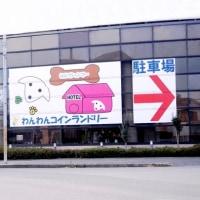 ペットホテル・朝食後の遊び・健康チェック(わんわん柏)