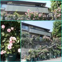 バラを奈良まで見に行きました