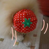 イチゴ娘(今日は写真です)