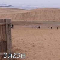 鳥取砂丘 1