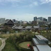 東京 増上寺と桜 春ならでわの美光景 思わず合掌 良き日が続きますように 良き日が送れますように