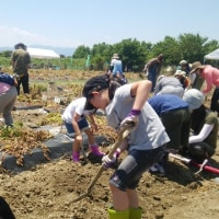 【自適に実年】汗だく!本格農園で収穫体験