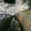 桜の友禅流し