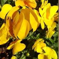 三月は黄色い花が多いのかな?