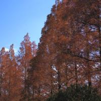 三ツ池公園の紅葉