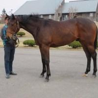 アドバンスマルス・調教見学ツアー募集馬レポート(8)