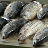 汚染された中国の水産物が米国内に流入している、大丈夫か  米国